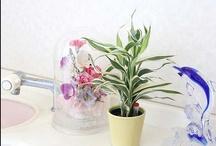 Green Interior 観葉植物 / お部屋やオフィスに飾ると素敵な空間に!観葉植物をご紹介です。http://www.bloom-s.co.jp/