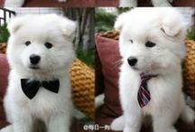 Cute Pet Fashion / Adorable Clothing and Accessories for your Pets