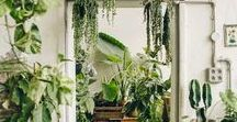 Urban Jungles / A collection of images focused on indoor plants and how they can be introduced to indoor spaces