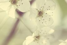 Flora / by Alison Fairbairn