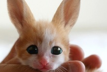 Baby Animals / by Linda Crenwelge