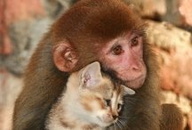 Animals / by Linda Crenwelge