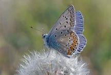 Butterflies / Farfalle / by C'e' Crisi! by Alex Bonetto