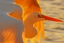 Birds and Bird Feeders / by Linda Crenwelge