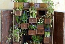 Home: Gardening / by Karen Skousen