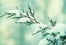 Winter / by Linda Difino