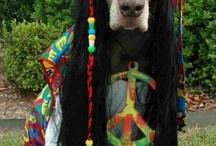 Hippie Chick Stuff / by Amy Johnsen