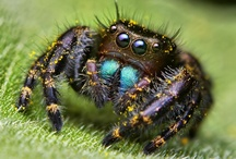 Spiders / Wonderful and beautiful weavers