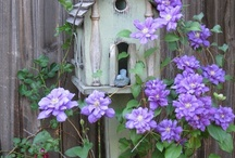 Bird Houses / by Penny Graves