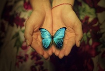 Butterflies / by Pepper