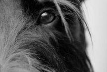 Pets / by Jan Baker Rader