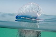 Marine Life  / by J Lourenco