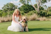 Pets at Weddings / Include your furry friend in your big day! Wedding inspiration ideas to include pets!