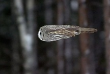 Owls are cool! / by Susan Hudson