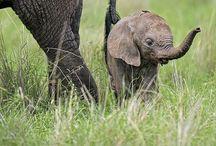 Cute Animals / by Pamela Hayes