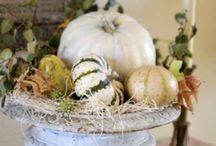 Halloween/Fall Decor / by Dawn Duncan
