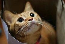 Kitties / I love cats / by Pamela Hayes