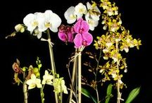Orchids and Orchid Blooms / A collection of photos of orchdis that we have taken inside our store.