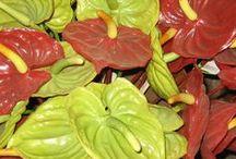 Tropical Flower Encyclopedia