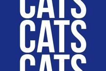 C-A-T-S, Cats, Cats, Cats!!