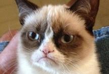 Grumpy Cat Makes Me Happy