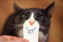 Here Kitty, Kitty, Kitty