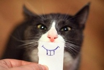 Here Kitty, Kitty, Kitty / by Kathy Knox Siegel
