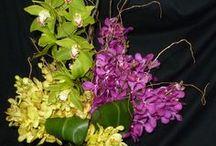Cut Orchid Spectacular!