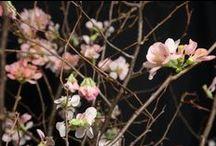 Berries, Filler & Branches - Encyclopedia
