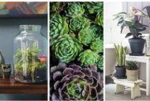 [ P L A N T . L I F E ] / Indoor and balcony plants