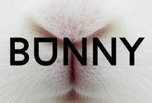 bunny /