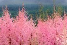 Nature - Amazing Plants