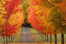 Fall / by Linsey Williams