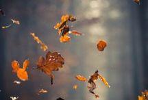 Fall / by Simona Špakovaitė