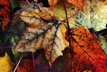 Props loves... Autumn / Here's a peek of the textures and tones that are inspiring our projects this season.