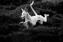 critters | creatures | animais