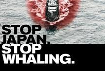 Sea Shepherd / Our world needs PAUL WATSON!!!!!