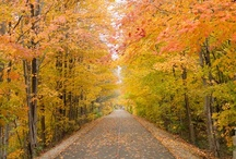 Fall into Autumn! / by Gorton's Seafood