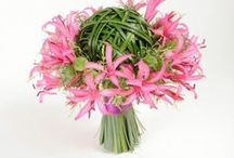 Nerine Lily / Inspiration for using Nerine Lilies in your bridal bouquets, centerpieces, boutonnieres and corsages.  Free Tutorials!  http://www.wedding-flowers-and-reception-ideas.com/make-your-own-wedding.html