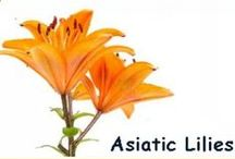 Asiatic Lily Wedding Flowers / Using beautiful Asiatic lilies in creative floral designs.  Learn how to make bridal bouquets, wrist corsages, groom boutonnieres, reception table centerpieces and church flower decorations.  Buy wholesale fresh flowers and discount florist supplies.