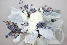 Wedding Greenery - Dusty Miller / Flower arrangements and bouquets that include Dusty Miller leaves.  Icy blue and soft to the touch, this foliage is a beautiful contrast to pastels and winter weddings.