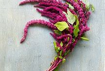 Amaranthus Wedding Flowers / Beautiful ideas and flower designs using red and green amaranthus. Learn how to make bridal bouquets, wrist corsages, groom boutonnieres, reception table centerpieces and church flower decorations.  Buy wholesale fresh flowers and discount florist supplies.