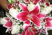 Oriental Lily - Stargazer Wedding Flowers / Arrangements featuring the favorite Stargazer Lily, known for it's deep pink stripe down the center of each petal and it's lovely fragrance.  Check out similar boards featuring White (Casa Blanca) and Medium Pink (Sorbonne)