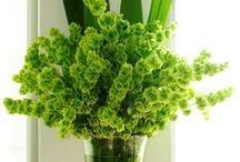 Bells of Ireland Wedding / by Wedding Flowers, Inc.