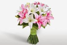 Oriental Lily Sorbonne (Pink) / Oriental lilies are know for their large blooms and delightful fragrance.  Orientals come in a large range of colors.  The most common have a different board featuring White, Deep Pink (Stargazer) and Medium Pink (Sorbonne)