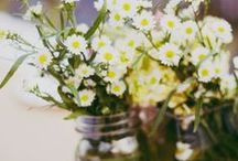 Spray Aster (Monte Casino) Wedding Flowers / Beautiful ideas for wedding flowers, including bridal bouquets, corsages, boutonnieres, reception table centerpieces and church decorations that include Spray Asters.