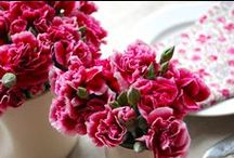 Carnation (Miniature) Wedding Flowers / Gorgeous ideas for using this fun little flower in your wedding designs.  Check out photos of bridal bouquets, corsages, boutonnieres, reception table centerpieces and church flowers.