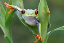 Insects and Frogs