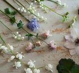 flowers/my garden / http://blog.floraviragboltja.hu/post/122