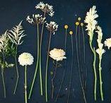 yellow palette / FLORA botanical atelier